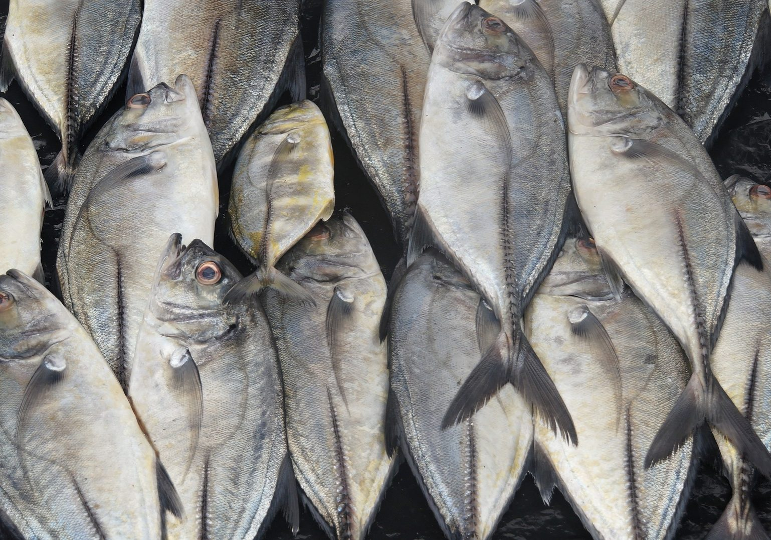 Seafood Events Europe 2018 | ImpexAid