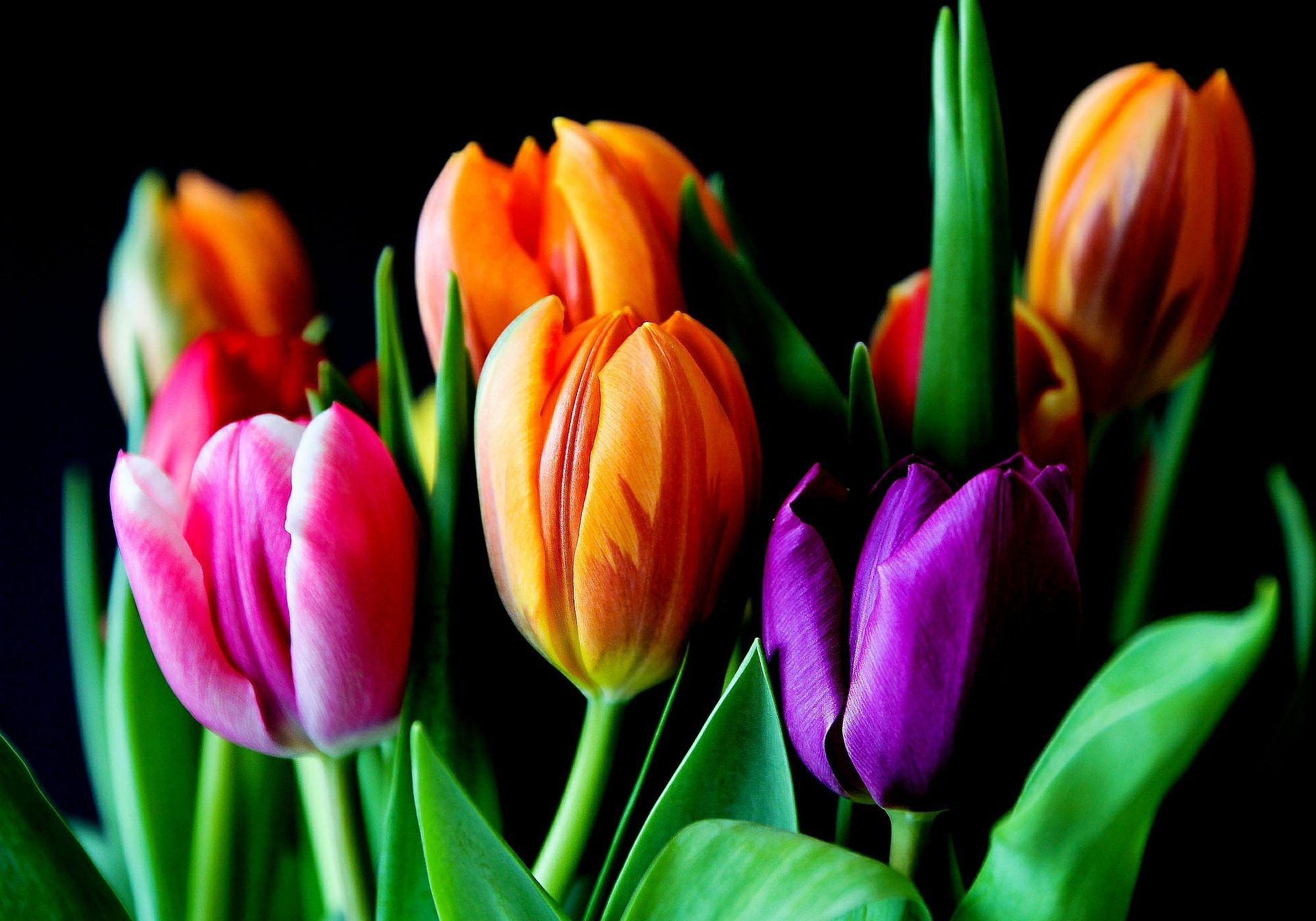 flowers-429041_1920