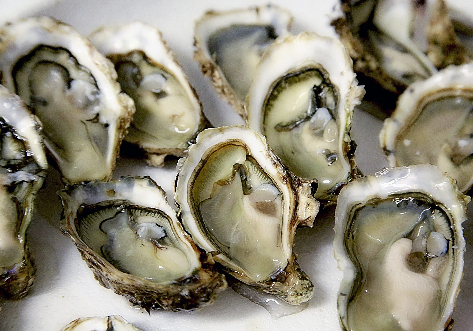 oyster-1522835_1920